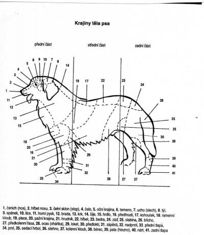 Krajiny těla psa